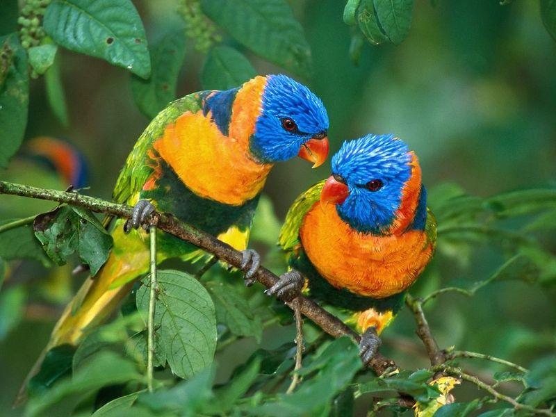 bright-birds